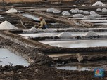Anggota DPR: Impor Garam Jangan Sampai Jadi Akal-Akalan Mafia