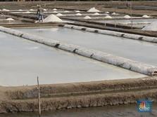 Pengusaha: Lanjutkan Rencana Impor Garam 3,7 Juta Ton