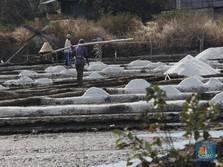 Kemenko Maritim: 400 Perusahaan Butuh Garam Impor