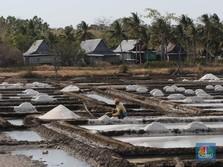 Catat! Pemerintah Janji Serap Garam Lokal Lebih Banyak 36%