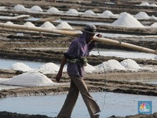 Pemerintah Tambah 40.000 Ha Ladang Garam di Indonesia Timur