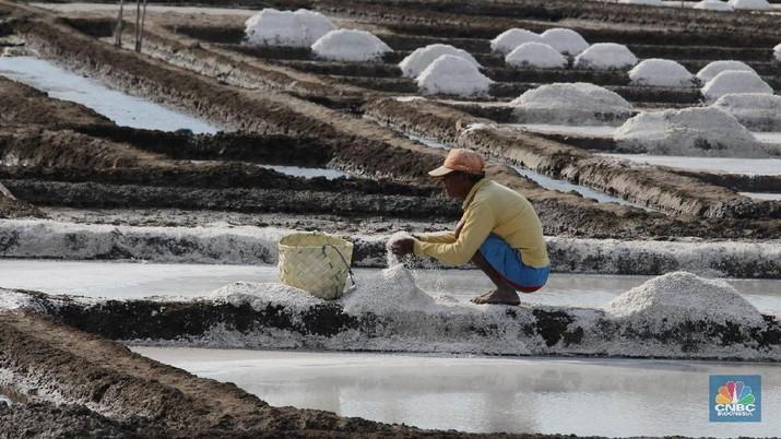 Indonesia telah mengimpor 2,6 juta ton garam atau senilai dengan US$ 95,52 juta.