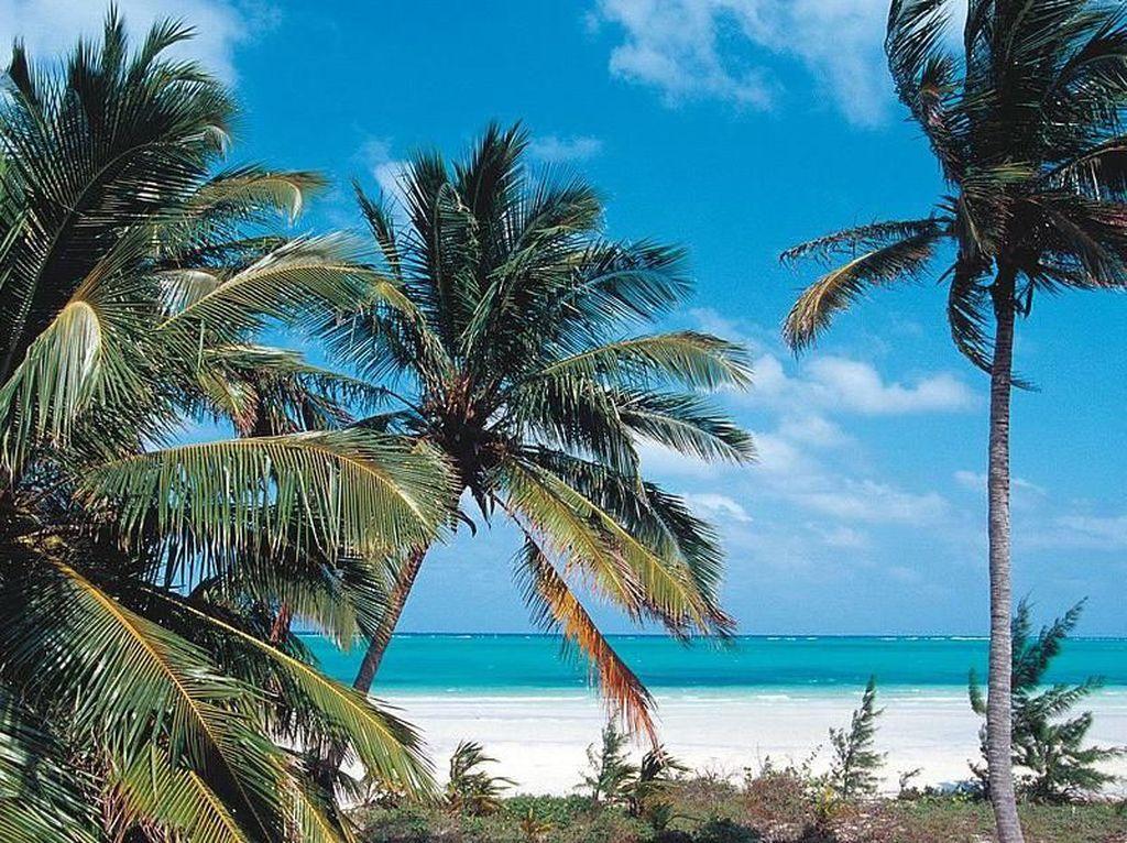 Ada pula pulau Bird Cay di Bahamas, Amerika Utara. Pulau ini seharga US$ 28 juta atau Rp 378 miliar. Pulau tersebut memiliki luas 250 hektar dengan objek hiburan pantai dan resort. Istimewa/Gulf News.