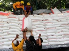Produksi Gula Turun Tiap Tahun, Pabrik Gula Harus Dimerger