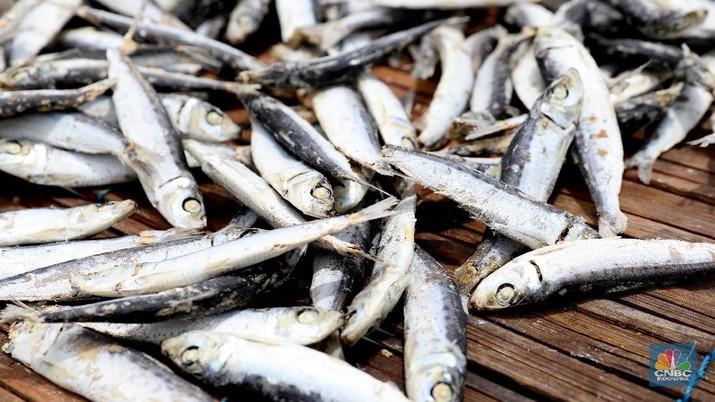Nelayan China mencuri ikan di laut China tetapi ironinya Indonesia mahal mencatatkan impor ikan besar dari negeri tirai bambu ini.