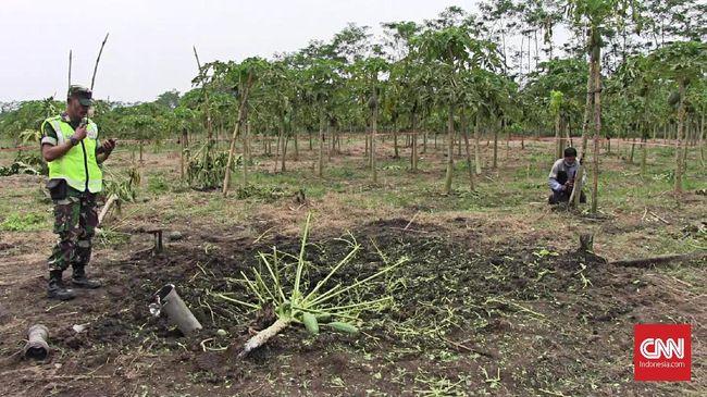 Roket Jatuh dan Meledak di Kebun Pepaya Warga Lumajang