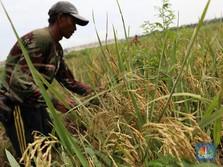 Cegah Anak Muda Malas Jadi Petani, Ini Strategi Pemerintah