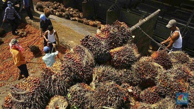 BWPT Heboh AS Boikot Perusahaan Sawit yang Punya Kebun di RI