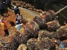 Pukulan Telak Bagi Industri CPO Indonesia