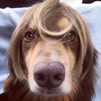 Sama dengan Russell, Amanda juga menyumbangkan sebagian rambutnya ke Locks of Love. Menariknya, ia mengunggah foto anjingnya yang tengah memakai potongan rambutnya sebagai wig ke akun Instagramnya, yaitu pada bulan Juli 2015 silam. (Foto: Instagram/mingey)