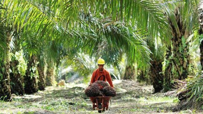 AISA GOLL Lepas dari TPS Food, Nasib Golden Plantation Masih Terpuruk