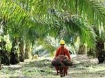 Lepas dari TPS Food, Nasib Golden Plantation Masih Terpuruk