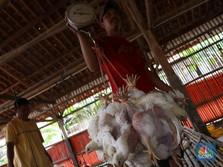 Live! Peternak Ayam Beberkan Nasib Mereka yang Mau Bangkrut