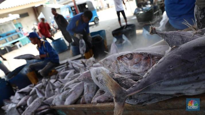Pembangunan pelabuhan untuk ekspor ikan harus melalui studi mendalam.