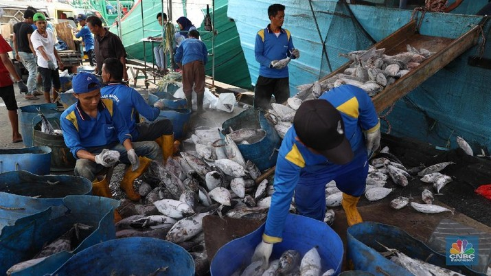 Menteri Susi: Ekspor Ikan dari Timur Bisa Mulai Bulan Depan