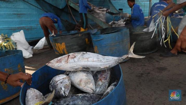 Ikan Cakalang hasil tangkapan nelayan dibongkar dari kapal di Pelabuhan Perikanan Samudra Nizam Zachman, Muara Baru Jakarta, Kamis (1/2/2018). Ditahun 2018 KKP menargetkan nilai ekspor perikanan Indonesia capai USD5,4 miliar. (CNBC Indonesia/Muhammad Sabki)