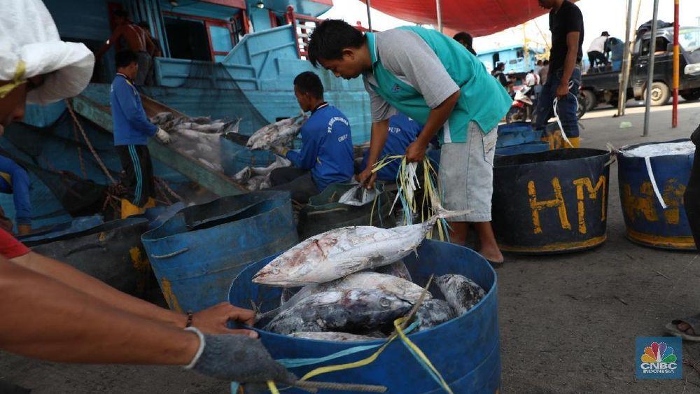 Ikan Cakalang hasil tangkapan nelayan dibongkar dari kapal di Pelabuhan Perikanan Samudra Nizam Zachman, Muara Baru, Jakarta, Jumat (2/2/2018). (CNBC Indonesia/Muhammad Sabki)