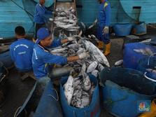 RI Impor Ikan dari China, Pemerintah Klaim Tak Tekor!