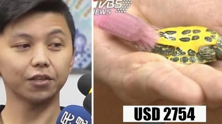 Pria Taiwan Digaji Rp 37 Juta untuk Mandikan Kura-Kura