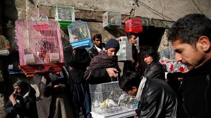 Bagi warga Kabul burung dapat membantu membawa bantuan dari tekanan kehidupan di ibukota Afghanistan, yang dilanda serangkaian serangan militan berdarah.