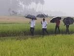 Hujan Deras, Jokowi Tinjau Program Padat Karya Tunai