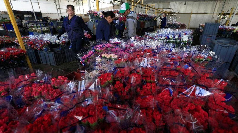 Karyawan mengatur karangan bunga untuk diekspor ke luar negeri di Discovery Farm di Facatativa, Kolombia. (REUTERS / Jaime Saldarriaga)