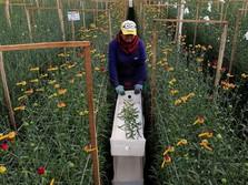 Jelang Perayaan Valentine Kolombia Siap Mengekspor Bunga