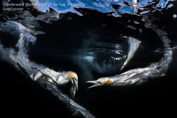 Karya Mengagumkan Jawara Kontes Foto Underwater 2018