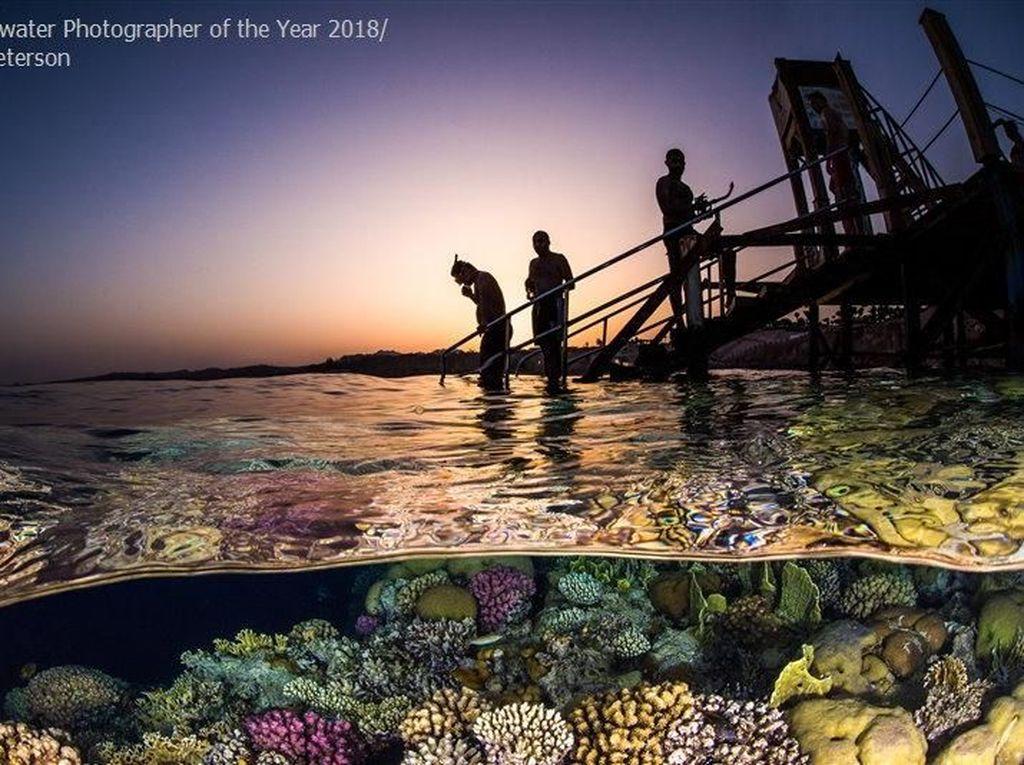 Juara ketiga kategori Wide Angle diraih Brook Peterson dari AS. Foto: Underwater Photography of The Year