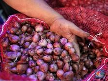 10 Importir Jual Bawang Merah Palsu, Raup Untung Rp 1,24 T
