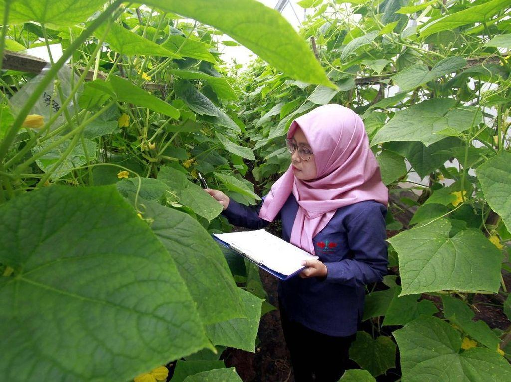 Seorang peneliti muda tengah meneliti pohon mentimun. Pool/Ewindo.