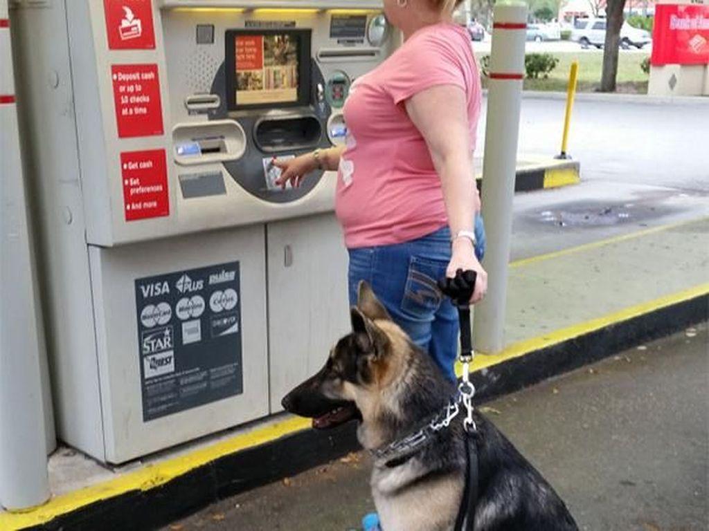 Tunggu apa lagi? Segera latih anjing Anda supaya bisa menjadi bodyguard yang siap sedia. Istimewa/Berodpanda