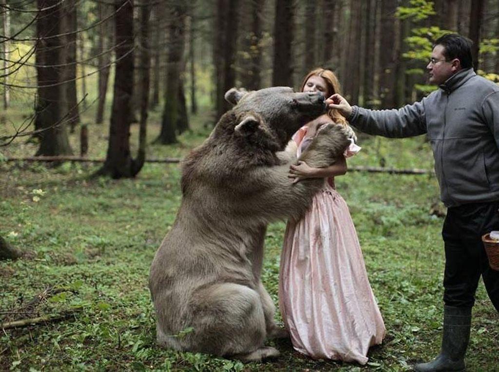 Seperti foto ini, sang beruang dialihkan perhatiannya oleh si pelatih. Foto: Katerina Plotnikova