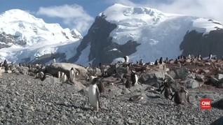 VIDEO: Greenpeace Usul Bangun Cagar Laut Antartika