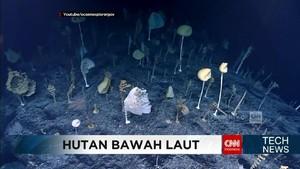 VIDEO: Keindahan Hutan dalam Laut