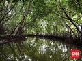 Hutan Mangrove Tongke-Tongke Mulai Bersolek