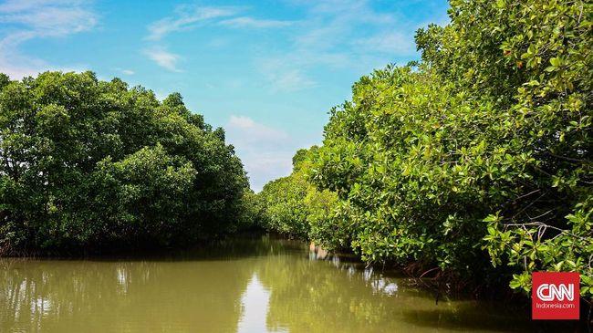 Timbunan Sampah di Muara Angke Segera Jadi Hutan Mangrove
