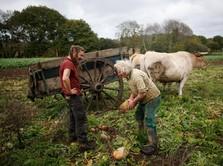 Semangat Tradisional Petani Prancis di Era Modernisasi