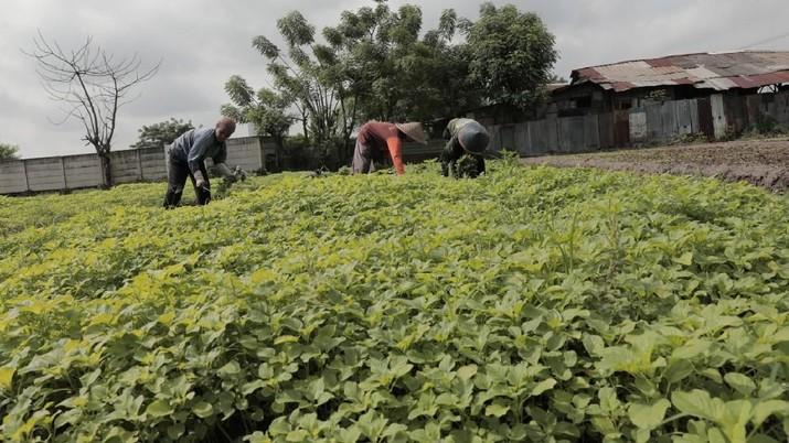 Badan Pusat Statistik (BPS) mencatat nilai tukar petani pada Februari 2020 sebesar 103,35.