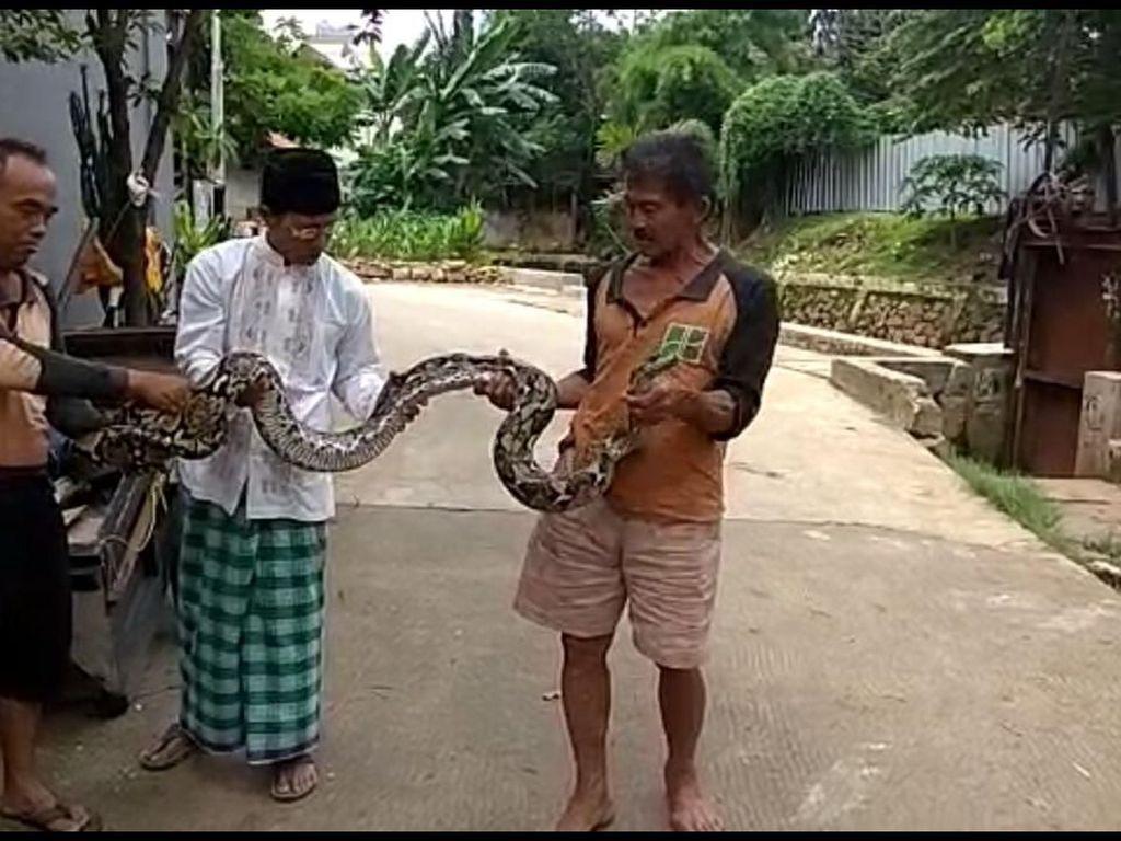 Dia mengatakan ular tersebut telah diberikan kepada salah seorang warga yang meminta. (dok UPK Badan Air Kecamatan Mampang)