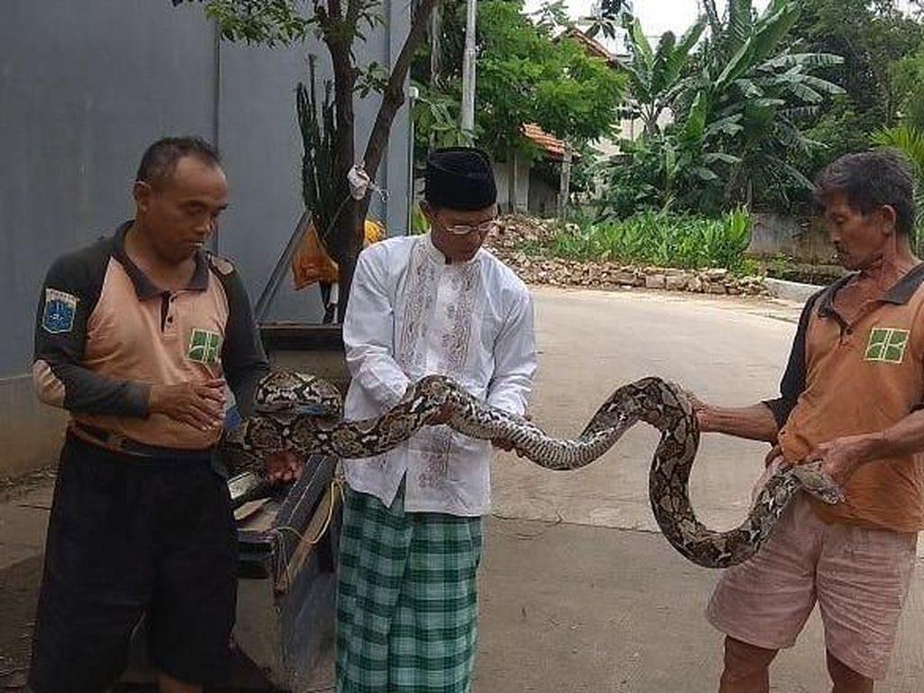 Rusdi menceritakan saat itu petugas UPK Badan Air Kecamatan Mampang sedang mengangkat sampah di lokasi tersebut. Namun tiba-tiba ada kepala ular muncul. (dok UPK Badan Air Kecamatan Mampang)