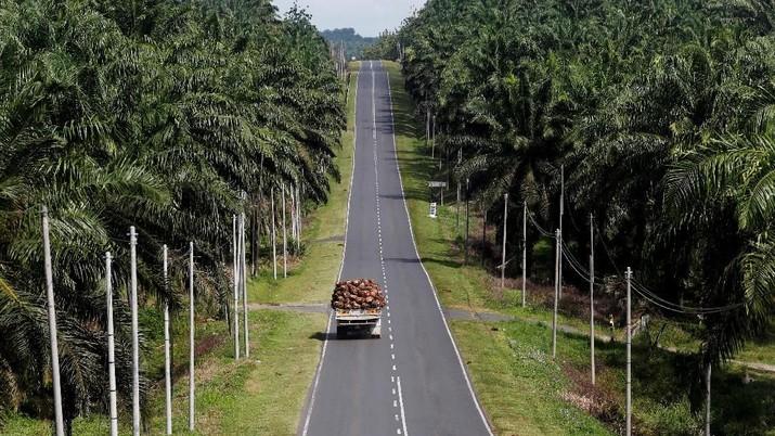 FILE PHOTO: A truck carrying oil palm fruits passes through Felda Sahabat plantation in Lahad Datu in Malaysia's state of Sabah on Borneo island, February 20, 2013. REUTERS/Bazuki Muhammad/File Photo