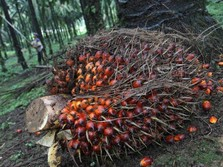 RI Sangkal Eropa Soal CPO Tak Ramah Lingkungan