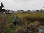 Sedih, Upah Riil Buruh Tani & Bangunan Turun di Maret 2019