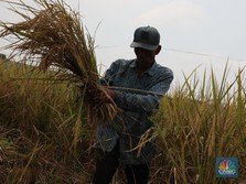 Titah Jokowi yang Tiba-Tiba Perintahkan Menteri Cetak Sawah