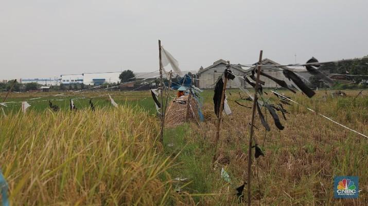 Nilai Tukar Petani (NTP) mengalami penurunan beruntun selama kuartal I 2019.