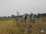 Dilanda Kekeringan, 9 Ribu Hektar Sawah Gagal Panen