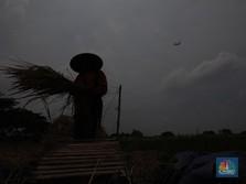 Cuaca Ekstrem Hantui Eksportir Beras Terbesar, Krisis Pangan?