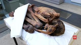 VIDEO: Tato Tertua 5.000 Tahun Ditemukan di Tubuh Mumi