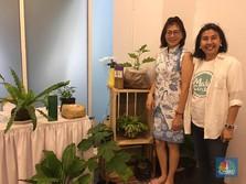 Cara Memulai Urban Farming, Bisnis Berkebun Kekinian